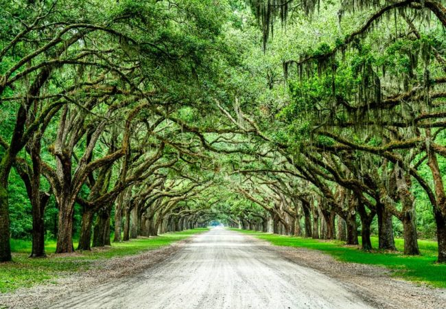 Wormsloe Historic Site | @chriswaltersphotography