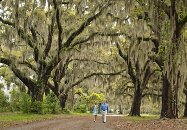 Avenue of Oaks, St. Simons